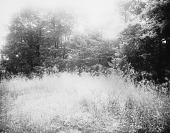 view [Giddings Property]: part of the West Annapolis property near the Severn River. digital asset: [Giddings Property] [glass negative]: part of the West Annapolis property near the Severn River.