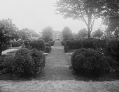 view [Marengo]: looking toward the orchard, showing the garden's many boxwoods. digital asset: [Marengo] [glass negative]: looking toward the orchard, showing the garden's many boxwoods.