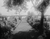 view [Holly Beach Farm]: a view across the pergola to the end of the garden. digital asset: [Holly Beach Farm] [glass negative]: a view across the pergola to the end of the garden.