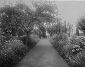view [Holly Beach Farm]: garden borders with shrubs, trees, and a grass walkway. digital asset: [Holly Beach Farm] [glass negative]: garden borders with shrubs, trees, and a grass walkway.