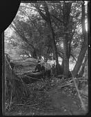 view [Tanglewood]: woman and three children under tree. digital asset: [Tanglewood] [glass negative]: woman and three children under tree.