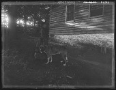 view [Tanglewood]: Cousin Florence with dog by stable. digital asset: [Tanglewood] [glass negative]: Cousin Florence with dog by stable.
