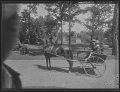 view [Tanglewood]: Clarence and Walter Liebig in a pony cart. digital asset: [Tanglewood] [glass negative]: Clarence and Walter Liebig in a pony cart.