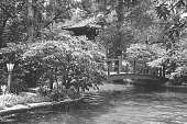 view [Middlegate Japanese Gardens]: Bridge over the pool with teahouse in background. digital asset: [Middlegate Japanese Gardens]: Bridge over the pool with teahouse in background.: 1962.