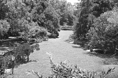 view [Middlegate Japanese Gardens]: View of garden from the northwest corner of tea house. digital asset: [Middlegate Japanese Gardens]: View of garden from the northwest corner of tea house.: 1962.