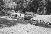 view [Middlegate Japanese Gardens]: View of stream with stone statue in background. digital asset: [Middlegate Japanese Gardens]: View of stream with stone statue in background.: 1962.