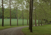 view [Teviot Farm]: sycamore-lined drive. digital asset: [Teviot Farm] [slide]: sycamore-lined drive.