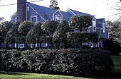 view [Untitled Garden, Fair Haven, New Jersey]: holly hedge. digital asset: [Untitled Garden, Fair Haven, New Jersey]: holly hedge.: 1998.