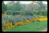 view [Four Oaks Farm]: garden border in late summer. digital asset: [Four Oaks Farm] [slide (photograph)]: garden border in late summer.