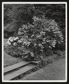 view [Berrall Garden]: steps leading into circular garden. digital asset: [Berrall Garden] [photoprint]: steps leading into circular garden.