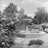 view [Avis Campbell Gardens]: fountain in the center of the gardens. digital asset: [Avis Campbell Gardens] [safety film negative]: fountain in the center of the gardens.