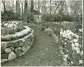 view [Crone Garden]: stone wall-lined path between bulb borders. digital asset: [Crone Garden] [safety film negative and photographic print]: stone wall-lined path between bulb borders.