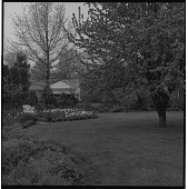 view [Millar Garden]: garden border and lawn in spring. digital asset: [Millar Garden] [safety film negative]: garden border and lawn in spring.
