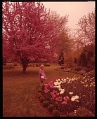 view [Millar Garden]: garden borders and beds in spring. digital asset: [Millar Garden] [film transparency]: garden borders and beds in spring.