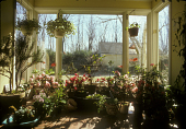 view [Adams Garden]: plants in solarium. digital asset: [Adams Garden] [slide]: plants in solarium.