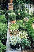 view [Eudymonia]: garden wall with potted plants. digital asset: [Eudymonia]: garden wall with potted plants.: 2007 Jul.
