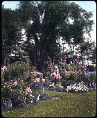 view Marble Garden digital asset: Marble Garden: [between 1914 and 1949?]