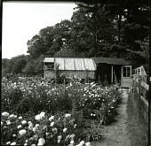 view [Haggerty Garden]: cutting garden and greenhouse/potting shed. digital asset: [Haggerty Garden] [photographic print]: cutting garden and greenhouse/potting shed.