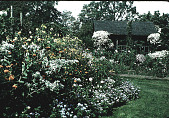 view [Seven Oaks]: garden view with summer house in background. digital asset: [Seven Oaks] [slide]: garden view with summer house in background.