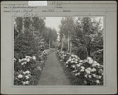 view [The Point]: a grass path lined with rhododendrons and woods. digital asset: [The Point] [photographic print]: a grass path lined with rhododendrons and woods.