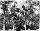 view [Miscellaneous Sites in the Adirondack Mountains]: an unidentified location, possibly in the Lake Placid area. digital asset: [Miscellaneous Sites in the Adirondack Mountains] [glass negative]: an unidentified location, possibly in the Lake Placid area.