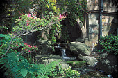 view [Hillwood]: stream with azalea plantings. digital asset: [Hillwood]: stream with azalea plantings.: 2002 May.