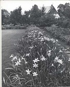 view [Kenneth D. Smith Gardens]: lawn and daylily bordered path further away from house. digital asset: [Kenneth D. Smith Gardens] [photoprint]: lawn and daylily bordered path further away from house.