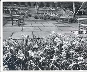 view [Kenneth D. Smith Gardens]: seating area surrounded by narcissus beds. digital asset: [Kenneth D. Smith Gardens] [photoprint]: seating area surrounded by narcissus beds.