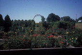 view [Emmons Farm's Gardens]: view of hybrid tea roses, with wrought iron fence and arbor in background, leading to old-fashioned roses. digital asset: [Emmons Farm's Gardens]: view of hybrid tea roses, with wrought iron fence and arbor in background, leading to old-fashioned roses.: 2007 Aug.
