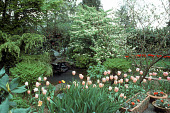 view [Booth Garden]: pink tulips in foreground of small pond and metal bird sculpture. digital asset: [Booth Garden]: pink tulips in foreground of small pond and metal bird sculpture.: 1992 Mar.