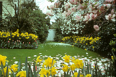 view [Booth Garden]: yellow daffodil borders surround lawn; blooming saucer magnolia. digital asset: [Booth Garden]: yellow daffodil borders surround lawn; blooming saucer magnolia.: 1992 Mar.
