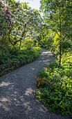 view [A Plant Collector's Garden]: the gravel walkway winds between lushly planted borders with pruned back mature rhododendron in bloom. digital asset: [A Plant Collector's Garden]: the gravel walkway winds between lushly planted borders with pruned back mature rhododendron in bloom.: 2015 May.