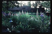 view [Stubblefield Garden]: facing east to house from gazebo. digital asset: [Stubblefield Garden]: facing east to house from gazebo.: 1995 May.