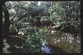 view [Oregon Dental Association]: Japanese garden. digital asset: [Oregon Dental Association]: Japanese garden.: 1997.