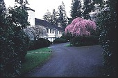 view [Green Gate]: approaching circular driveway with view of flowering fruit trees and house. digital asset: [Green Gate]: approaching circular driveway with view of flowering fruit trees and house.: 1998 Mar.