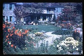 view [Boxly]: flower beds and back of house. digital asset: [Boxly]: flower beds and back of house.: 1960 Aug.
