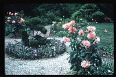 view [Boxly]: flower beds. digital asset: [Boxly]: flower beds.: 1979 Jun.