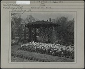 view [Breeze Hill]: Gazebo behind flower bed of Daffodils. digital asset: [Breeze Hill] [photographic print]: Gazebo behind flower bed of Daffodils.