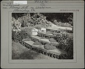 view [Breeze Hill]: stone wall and stairs with ground cover plants growing on each step. digital asset: [Breeze Hill] [photographic print]: stone wall and stairs with ground cover plants growing on each step.