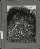 view [Breeze Hill]: flower beds of tulips with arches arcoss the beds. digital asset: [Breeze Hill] [photographic print]: flower beds of tulips with arches arcoss the beds.