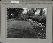 view [Breeze Hill]: tulips and shrubs bordering lawn. digital asset: [Breeze Hill] [photographic print]: tulips and shrubs bordering lawn.
