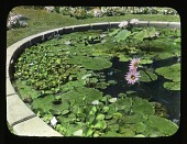 view [Breeze Hill]: water lilies (nymphaea) in a manmade lily pond. digital asset: [Breeze Hill] [lantern slide]: water lilies (nymphaea) in a manmade lily pond.