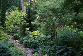 view [Fox Hollow]: Beyond the courtyard garden a stone path leads into the woodland garden. digital asset: [Fox Hollow]: Beyond the courtyard garden a stone path leads into the woodland garden.: 2016 July 26