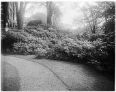 view [John Brown House]: plantings on the grounds of the house. digital asset: [John Brown House] [glass negative]: plantings on the grounds of the house.