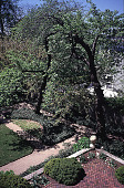 view [Rochambeau House]: terrace from above, showing cherry trees and ground cover. digital asset: [Rochambeau House]: terrace from above, showing cherry trees and ground cover.: 1999 May.