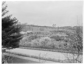 view [Miscellaneous Trees, Shrubs and Plants]: a view across the Arnold Arboretum showing Pyrus x arnoldiana and other flowering trees and shrubs. digital asset: [Miscellaneous Trees, Shrubs and Plants] [glass negative]: a view across the Arnold Arboretum showing Pyrus x arnoldiana and other flowering trees and shrubs.