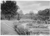 view [Miscellaneous Trees, Shrubs and Plants]: perennial beds and borders in the Harvard Botanical Garden. digital asset: [Miscellaneous Trees, Shrubs and Plants] [glass negative]: perennial beds and borders in the Harvard Botanical Garden.