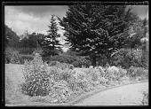 view [Miscellaneous Trees, Shrubs and Plants]: a perennial bed in the Harvard Botanical Garden. digital asset: [Miscellaneous Trees, Shrubs and Plants] [glass negative]: a perennial bed in the Harvard Botanical Garden.