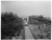 view Unidentified Garden digital asset: Unidentified Garden [photonegative]