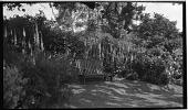 view [Unidentified Sites]: a bench in an unidentified garden location. digital asset: [Unidentified Sites] [negative]: a bench in an unidentified garden location.